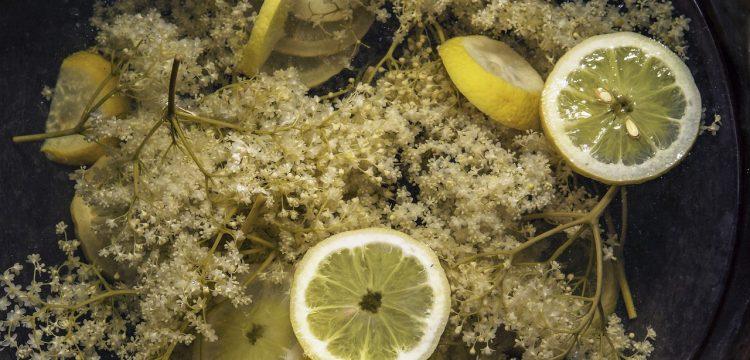 Elderflowers with lemon slices.