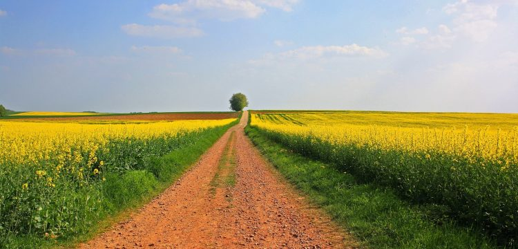 A farm lane with rows of flowers on either side.