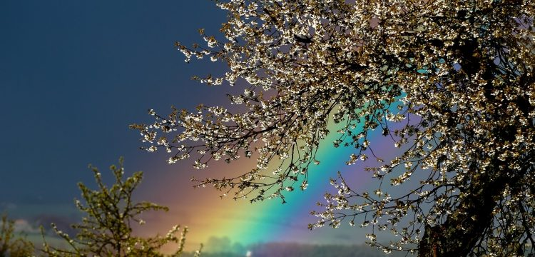 A rainbow behind the leaves of a tree.