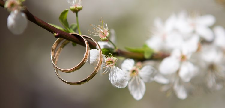 Two wedding bands hanging from a blossoming tree branch.