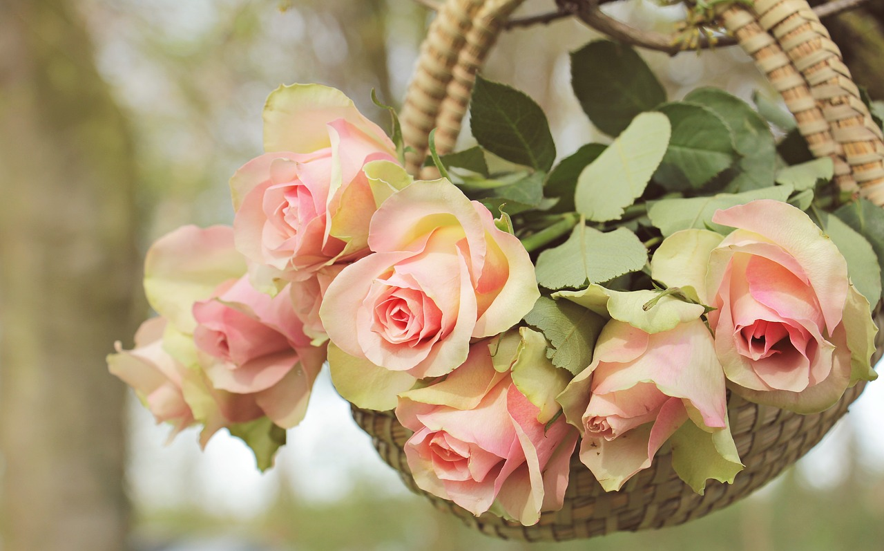 Basket of peach colored roses.