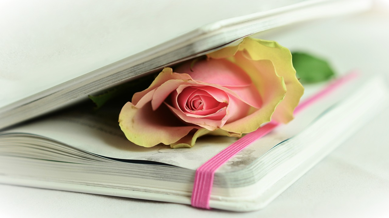 A yellow and pink rose pressed between the pages of a book.