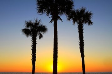 Three palm trees in front of a beautiful sunset.