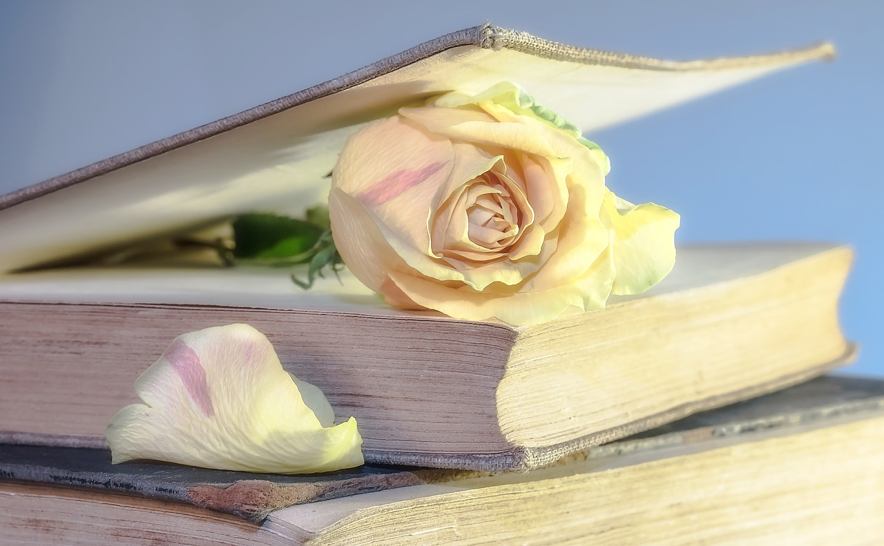 Light pink rose in between pages of an elegant book.