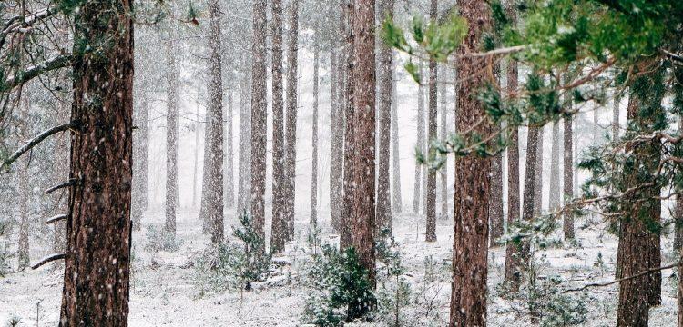 Snowstorm.
