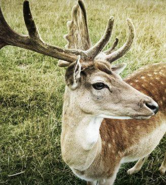 A buck.