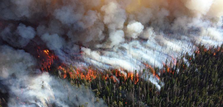 Wildfire.