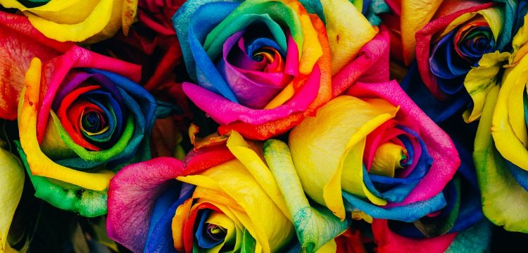 Rainbow colored roses.
