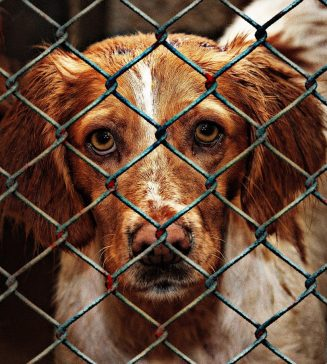 Dogs in a shelter.