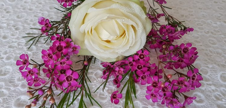 White rose with bright pink flowers.
