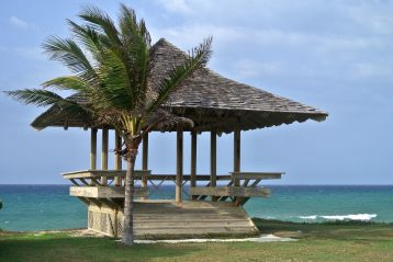 Palm tree in Jamaica.