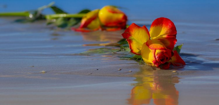 Flowers laying in the sand on a beach.