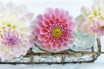 Zinnia wedding flowers.
